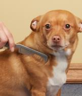 Pet Grooming Comb