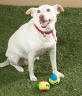 Dog Tennis Balls - Set of 2
