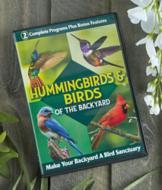 Hummingbirds and Birds of the Backyard DVD