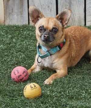 Rubber Dog Balls - Set of 2