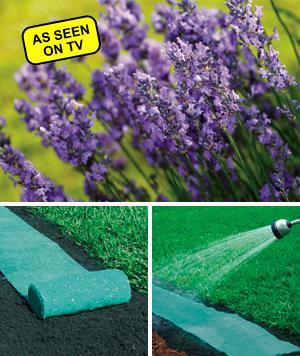 Roll Out Lavender Garden Bed