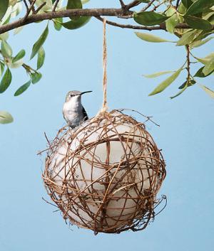 Hummingbird Nester