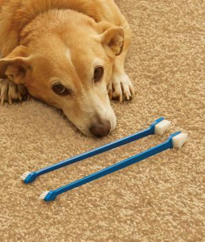 Dog Toothbrushes - Set of 2