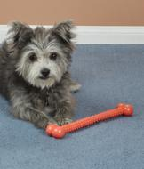 Doggy Pull Play Toy
