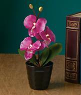 Illuminated Everlasting Pink Orchid