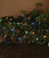 Dragonfly Garden Lights