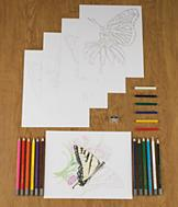 Butterfly Drawing Kit