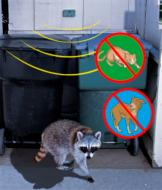 Dog, Cat and Raccoon Repelling Device