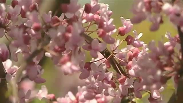 Tips for Managing Your Allergies