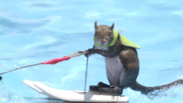 Water Skiing Squirrel Makes X Games Debut
