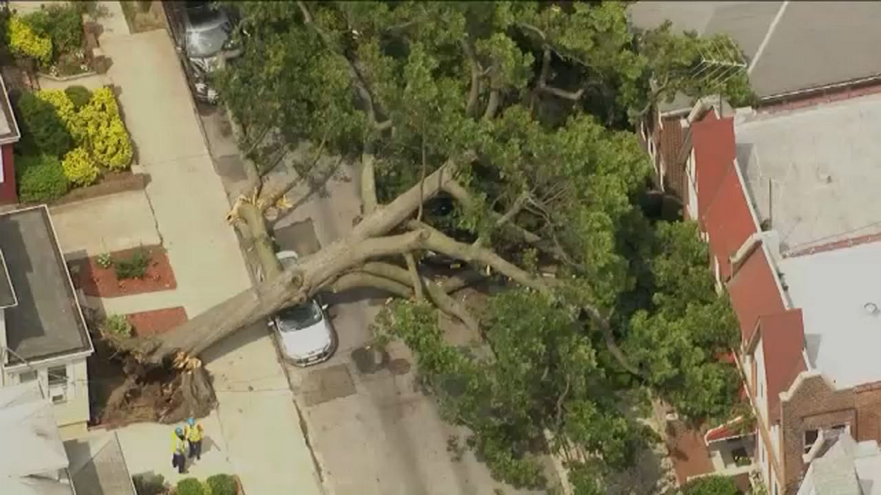 Tree falls on car and 2 buildings in the Bronx