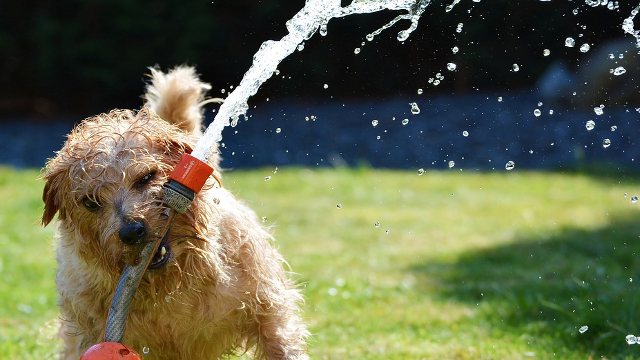 Where Does The Phrase Dog Days Of Summer Come From