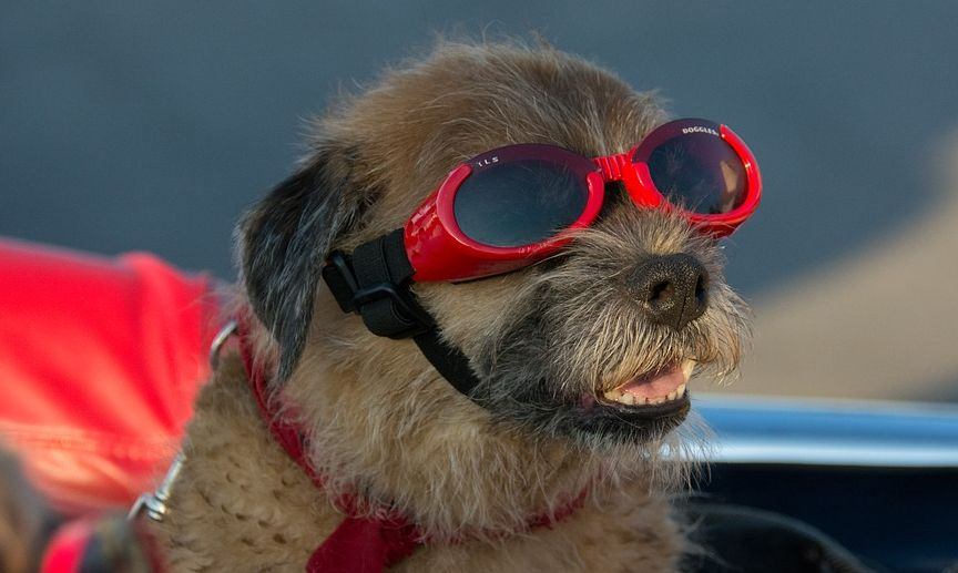 Can pets go blind from the solar eclipse?