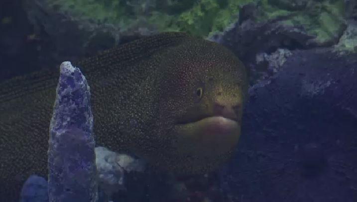 Sneak Peek at Via Aquarium in Schenectady