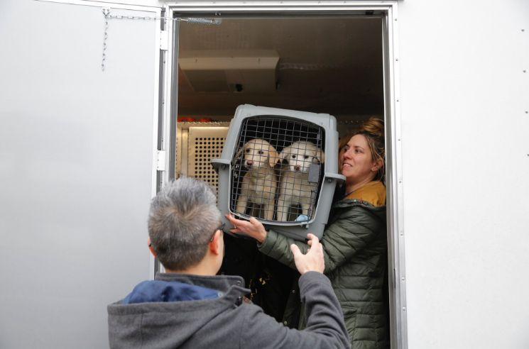 Rescatan 46 perros listos para consumo humano
