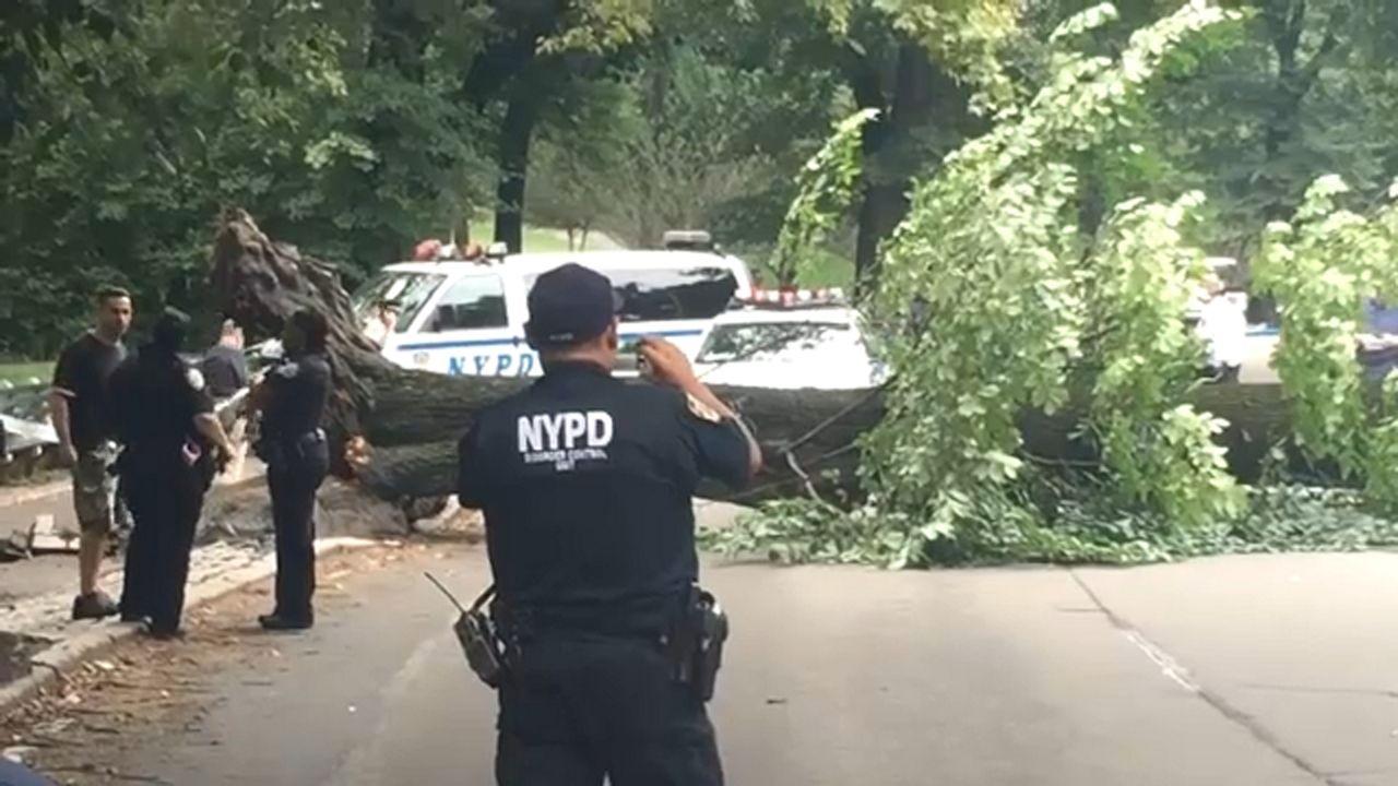 Deja a cuatro heridos un árbol derribado en Central Park