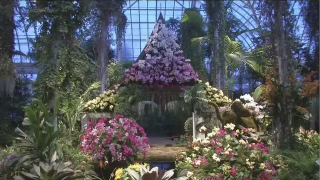Bronx in Bloom: Annual Orchid Show Transports Visitors to Thailand
