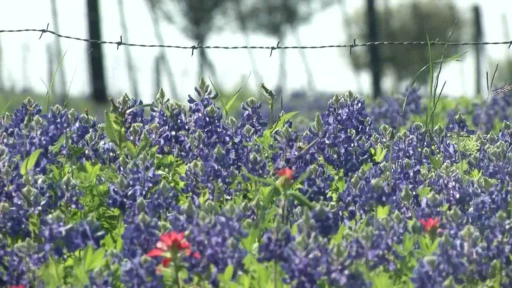 Spring flowers blooming all over texas mightylinksfo