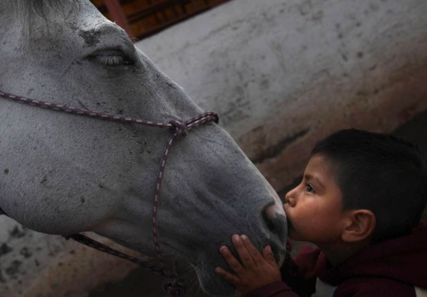 "In this Aug. 26, 2014 file photo, 4-year-old patient Saul Valverde kisses Andariego, a 19-year-old veteran horse that retired from ""charreria,"" the Mexican version of a rodeo, at a corral in southern Mexico City. Andariego now works as a therapy horse, helping children with special needs. In Mexico, the career of the charro horse usually runs about 10 to 12 years."
