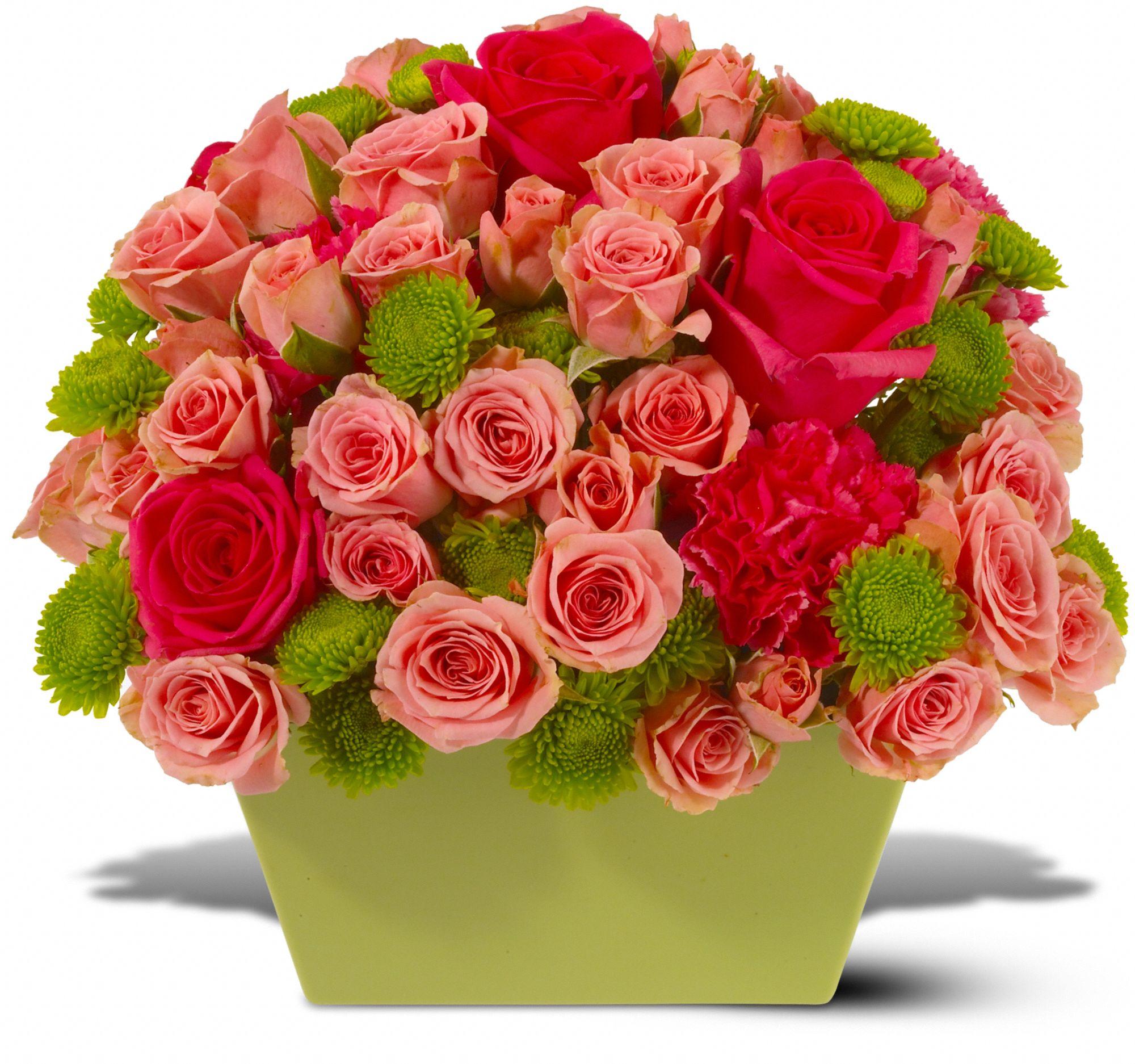 Chelsea Roses