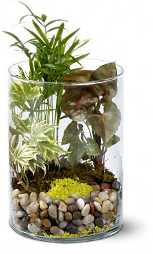 Garden in Glass Plants, Garden in Glass Plant Basket - Teleflora.com