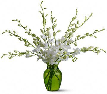Serenity Orchids Flowers, Serenity Orchids Flower Bouquet - Teleflora.com