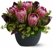 Positively Protea Flowers