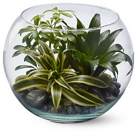 Sphere of Tranquility Plants, Sphere of Tranquility Plant Basket - Teleflora.com