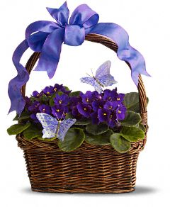 Violets and Butterflies Plants, Violets and Butterflies Plant Basket - Teleflora.com :  mom violets basket plant