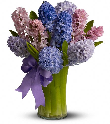 Fragrant Hyacinth, picture