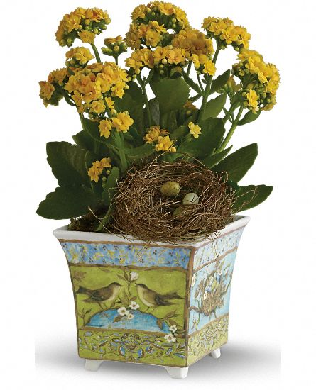 Susan Winget's Songbird Planter by Teleflora Flowers