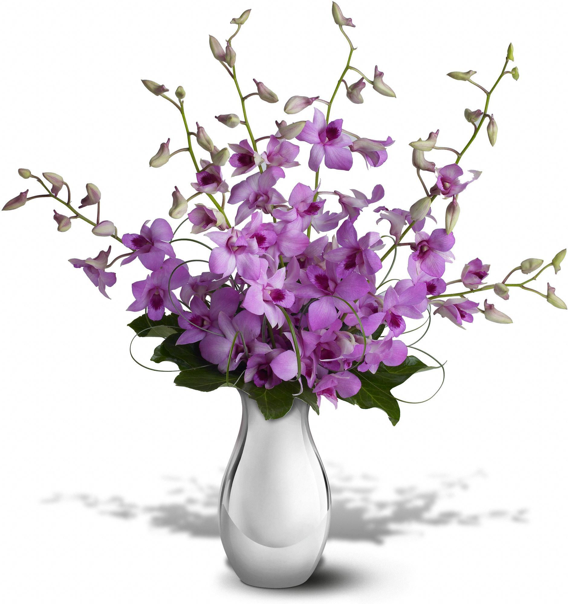 Teleflora's Orchid Reflections