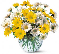 Dashing Daisies Flowers