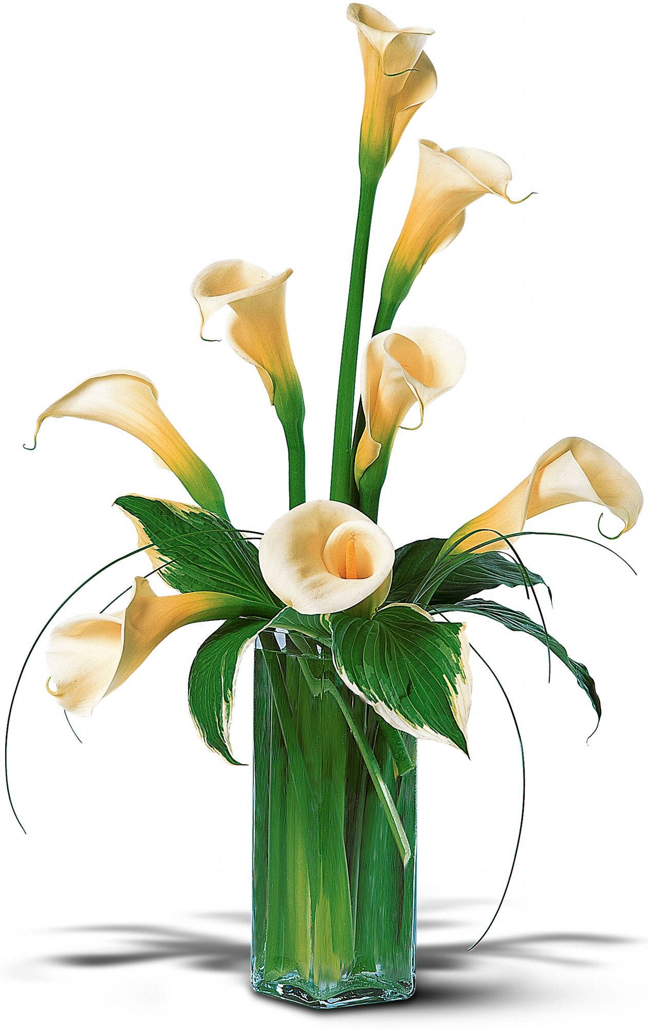 Hunt Valley Florals & Gifts, Hunt Valley, Maryland - White Callas, picture