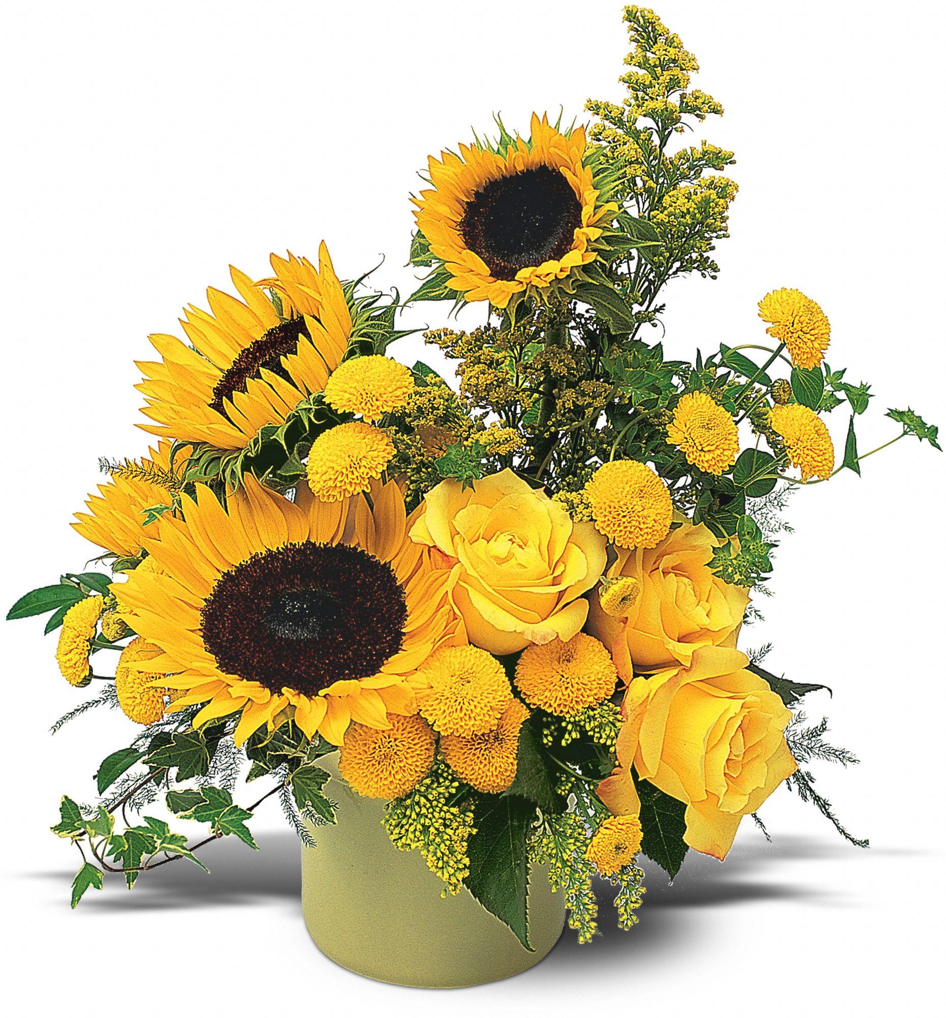 A Pot of Sunflowers