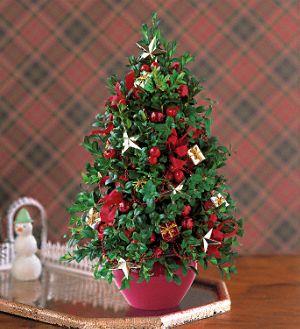 Boxwood Tree - Teleflora.com :  boxwood tree christmas gift christmas tree christmas present