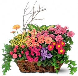Deluxe European Garden Basket Plants