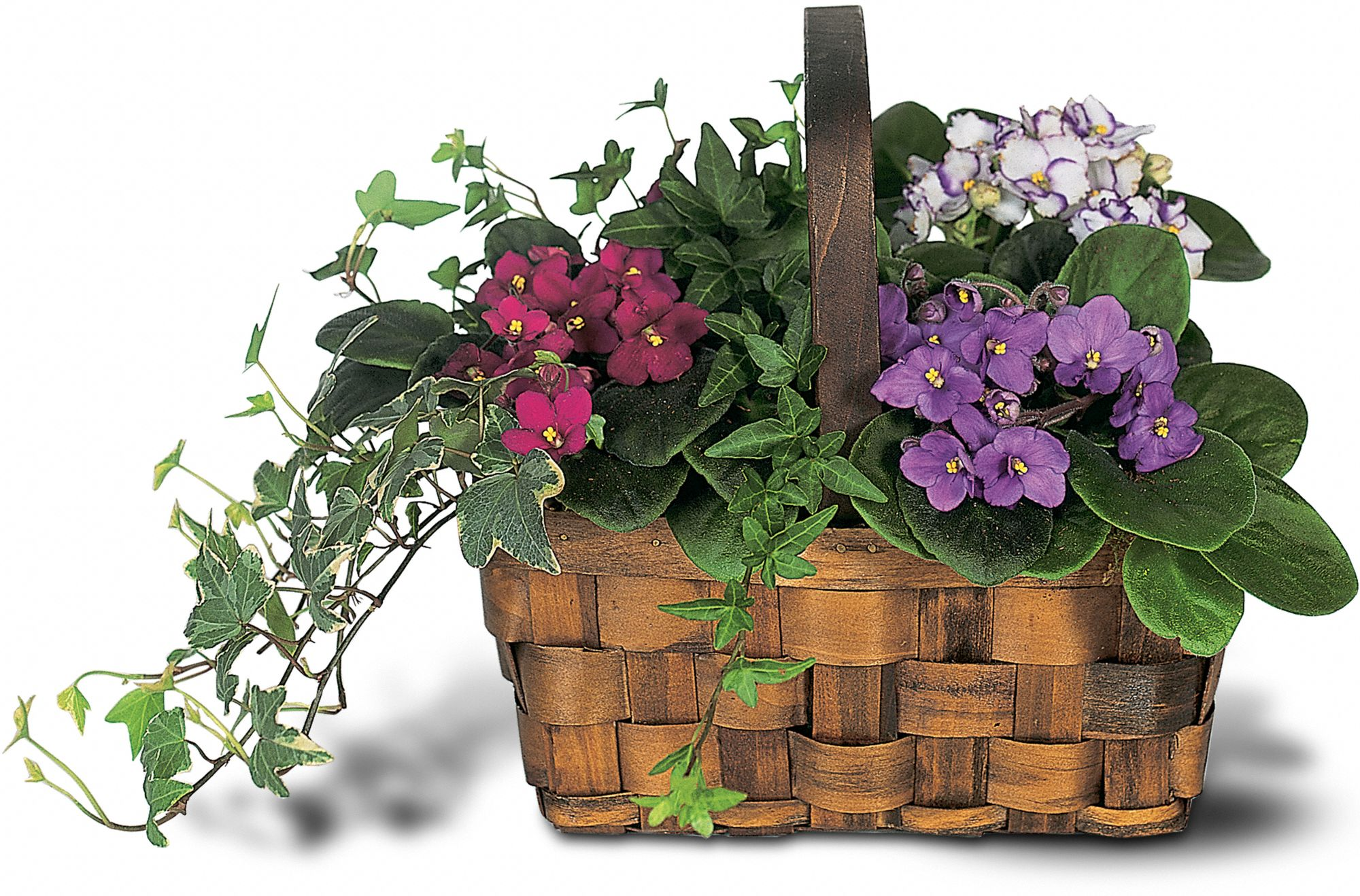 Mixed African Violet Basket, picture