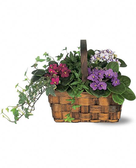 Blooming Plants - Mixed African Violet Basket