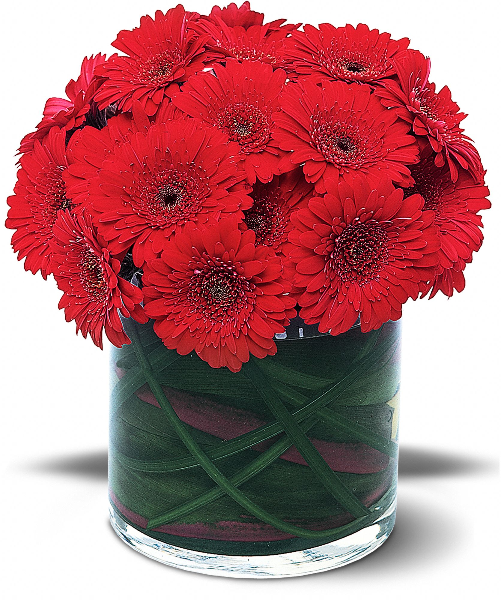 Red Gerbera Collection