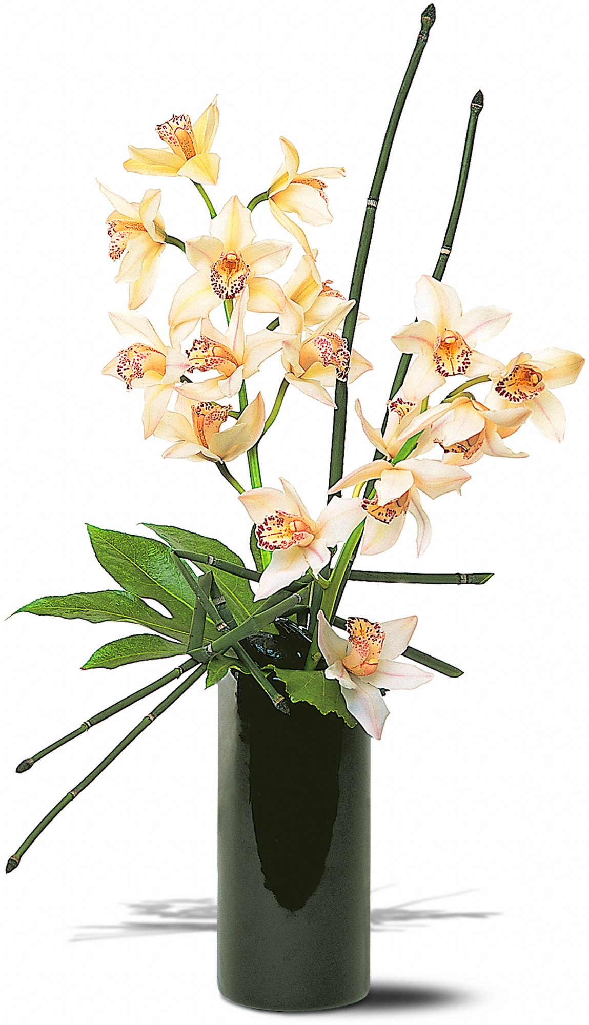Hunt Valley Florals & Gifts, Hunt Valley, Maryland - Artful Orchids, picture