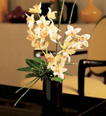 Artful Orchids Flowers, Artful Orchids Flower Bouquet - Teleflora.com :  flower artful orchids flower arrangement bouquet teleflora