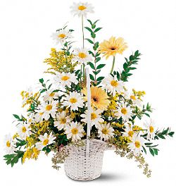 Drop of Sunshine Basket Flowers
