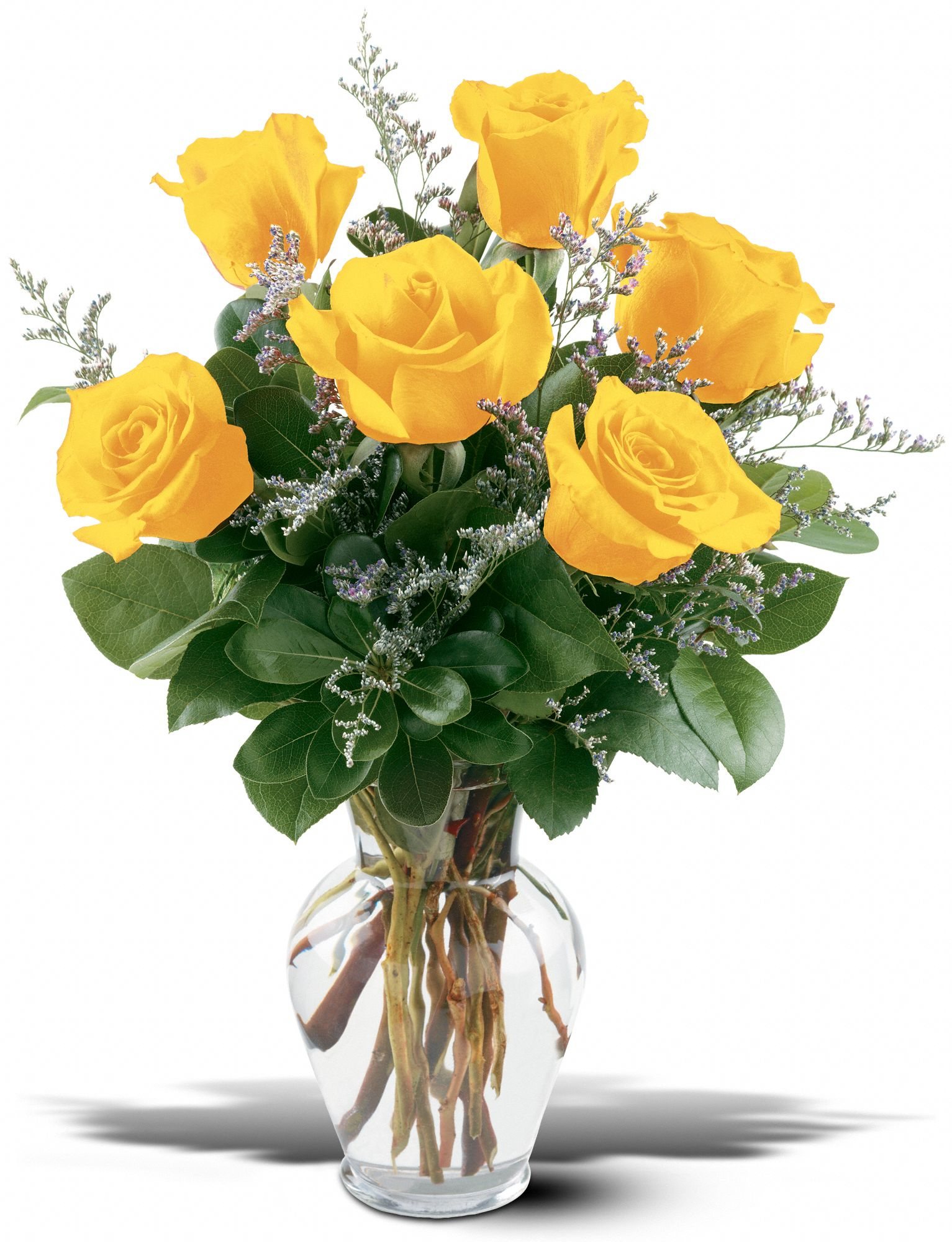 6 long stem yellow roses