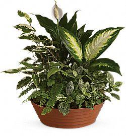 Serene Retreat Plants