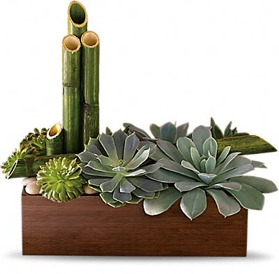Shop for Succulent Plants
