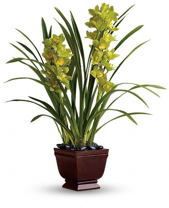 Teleflora's Splendid Orchids Plants