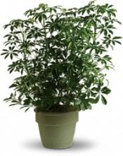 Plantes - Admirable arboricola