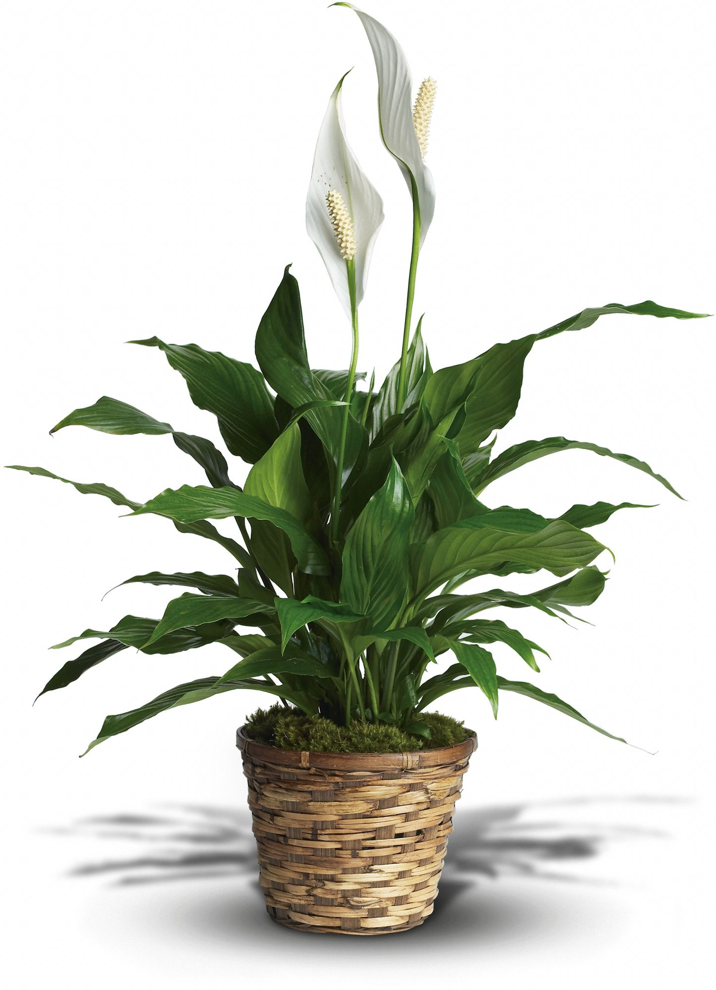 make your house greener with indoor plants, Natural flower