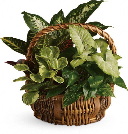 Emerald Garden Basket Plants